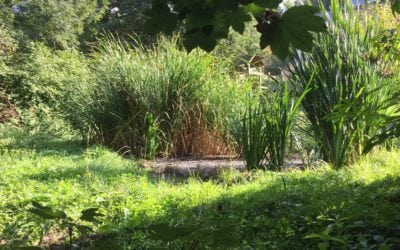 Visite d'un lagunage le 9 septembre