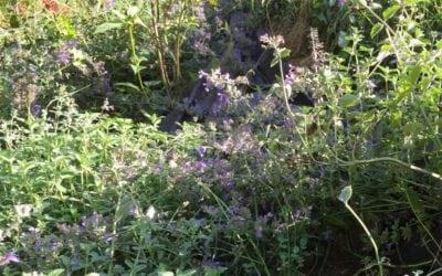 """Balade """"plantes comestibles"""" le 23 septembre"""